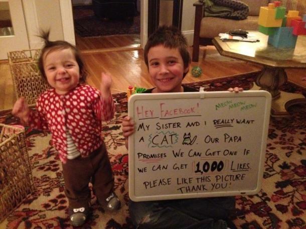 Facebook: due bambini raccolgono 120.000 like per avere in regalo un gatto